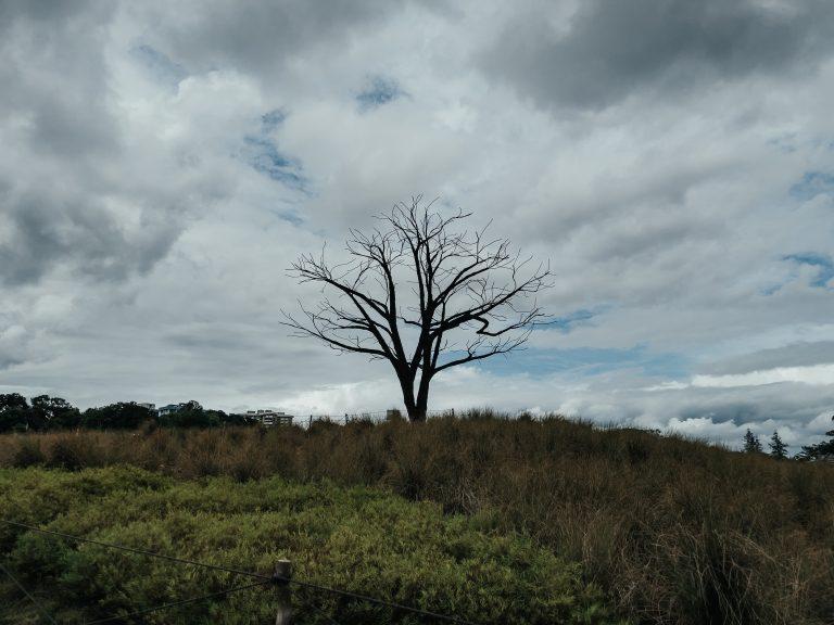 Comment dégager un arbre mort de son terrain ?
